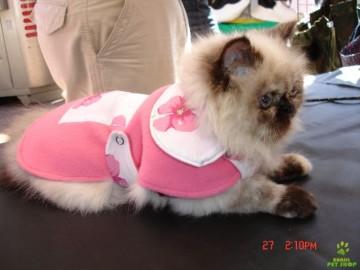 Roupinhas para Gatos Filhotes, Fotos e Modelos
