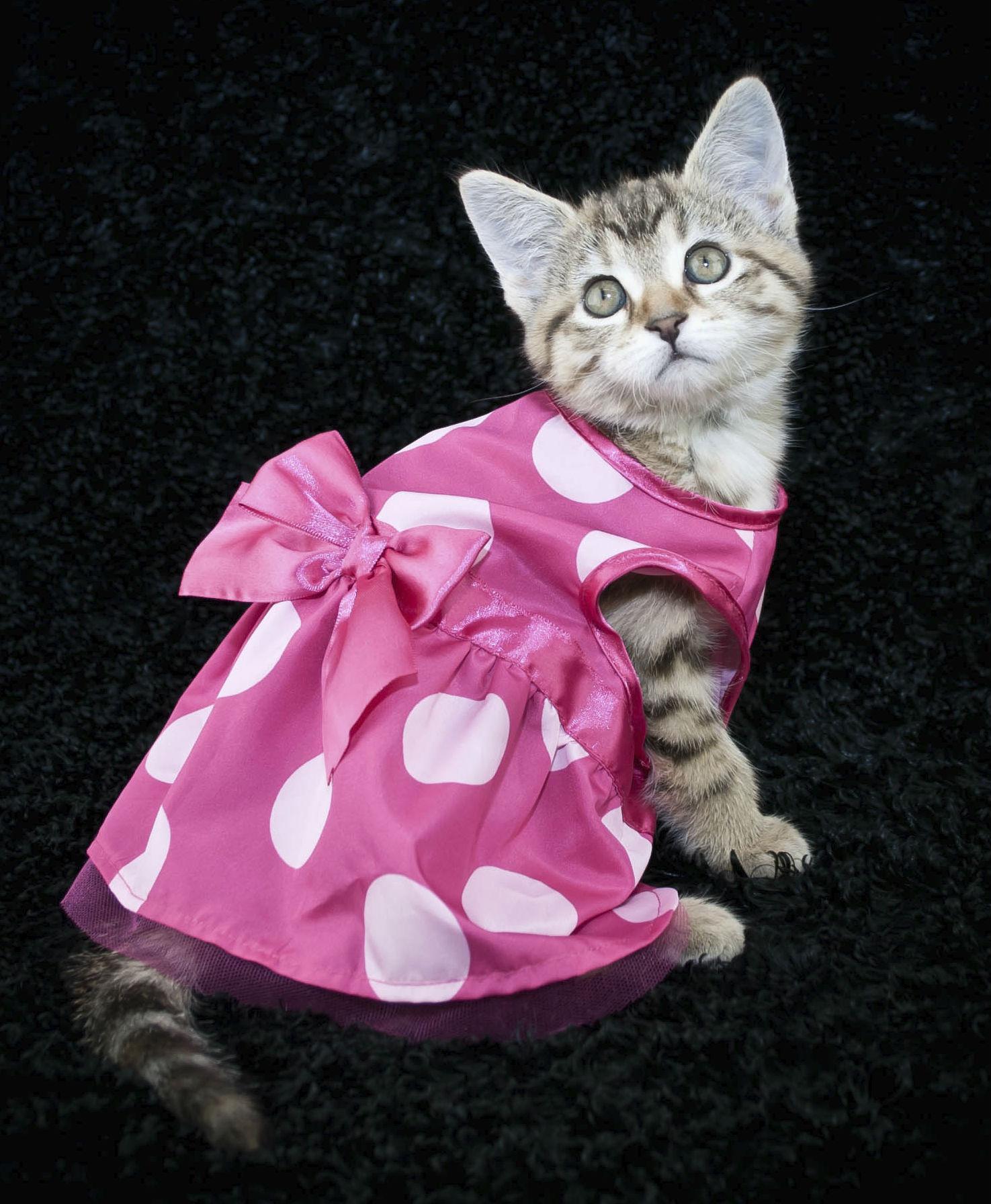 Roupinhas para gatos filhotes fotos e modelos ideias mix - Fotos de casas para gatos ...