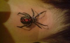 Tatuagens 3D de Aranhas, Tatuagens Masculinas e Femininas