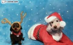 Roupinhas de Natal para Cachorro, Fotos e Modelos
