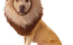 Confira Modelos de Fantasias Para Cachorro