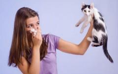 Sintomas e Tratamentos a Alergia a Pelos de Animais