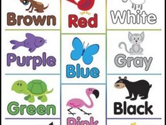 desenhos para colorir com cores em ingles